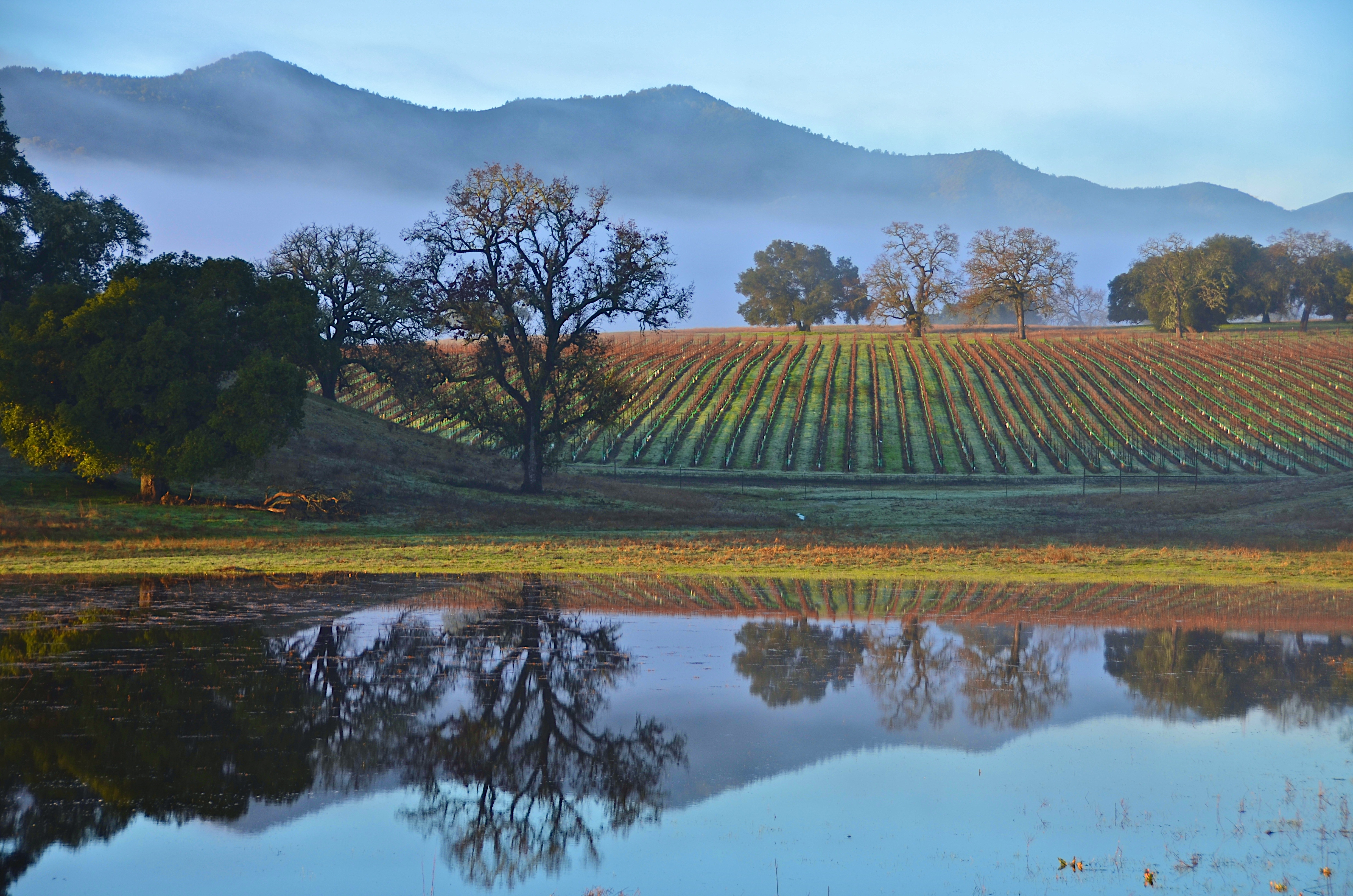 Paso Robles California >> 10 Sustainable Wineries In Paso Robles Ca Paso Robles Wineries