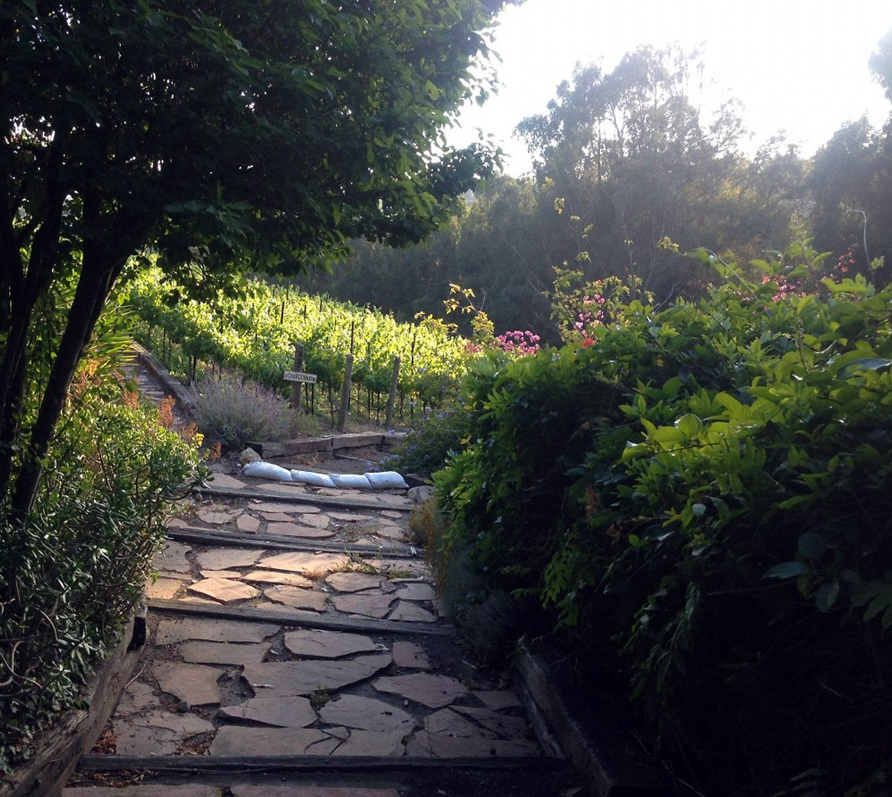 Hoyt Family Vineyard Walkway